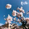 """春だ!春は""""はる""""を楽しみましょう~!!🌸🌸🌸"""