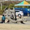 板野町歴史文化公園の池(仮称)(徳島県板野)