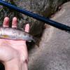 管理釣り場は渓流へのステップに上がるための練習場なのか?