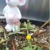 小台 生活広場 花壇に咲く一輪の花☆