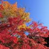 京都より紅葉2020