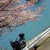 春の花色々 でもほとんど桜
