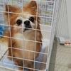 保護犬コスモの成長日記6月《怖がり犬専門のドックトレーナーに相談編》