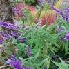 庭の彩りと今日のしいたけ栽培日記。