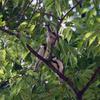 大阪城公園の野鳥たち。