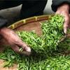 【300年以上続く老舗】京都でお茶を買うなら一保堂へ