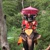 【タイ観光】水上マーケット&象に乗ってみたら楽しかった話!