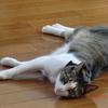 おネコさま風で涼んで落ち着いて。