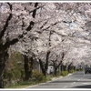 東京から2時間で行ける桜の名所! ハイキングしながらお花見はどう?長瀞桜まつりへ行こう