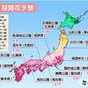 第5回桜開花予想では今週末にも東京で桜が開花!?ポカポカ陽気で各地の予想が早まる!!