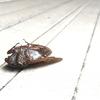 セミとゴキブリを通して、彼女に惚れ直した話