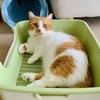 新しいお昼寝スペースの誕生?掃除後のトイレでまったりしてしまう愛猫。