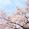 平成最後の春、入会キャンペーン!