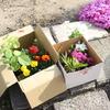 花を植える その2