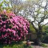 英語ボキャブラリ植物の名前【5月のイギリスで学ぶ】