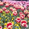 春が来た!🌸