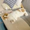 新たなお気に入りスポットは、速乾タオルの上!