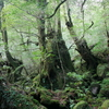 屋久島之旅 その3-縄文杉・白谷雲水峡トレッキング-