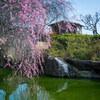 【写真】最近の写真撮影(2018/3/11)世界の梅公園その1