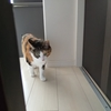 【愛猫日記】毎日アンヌさん#255