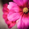 Canon EOS R6が届きました! カメラ初心者が星空から花の撮影を四苦八苦して行った記念すべき初日です!