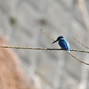 野鳥撮影に行ってきました@奈良山公園から恩田川へ