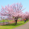 札幌も春らしくなってきました