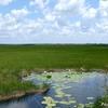 ベリーズ クルックドツリー野生生物保護区の裏の湖