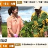 枝豆の「絶対うまいゆで方」!?「枝豆とヤマノイモの素揚げ」や「浸しえだまめ」はだれでも出来そう./関東地方に今の時期出回っている枝豆は東北産なんですね.NHK おかわり!にっぽん選「えだまめ」 /付録:枝豆の産地と栄養