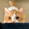 【猫学】構いすぎにご注意!猫の心の病気「分離不安症」