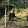 早贄も見れる!上野で動物の世界を覗いてきた