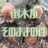 台風で倒木した樹木が放置されたままで、このままではシロアリが増えそうな気がする