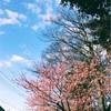■終わりは始まり。春がきてますね。