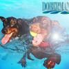 【大型犬、7月の飼い方】夏の散歩とケア
