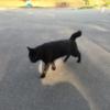 金岡公園のネコ