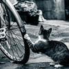 [ま]自転車泥棒 @kun_maa