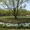 美術村庭園へ