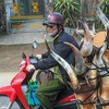 【痛快】決して珍しくない『それ行け ‼ 珍バイク』10選③ in Vietnam