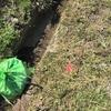 畦のゴミ拾い