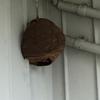 浜松市で軒下のスズメバチを駆除してきました
