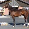 2022年新種牡馬:リアルスティール