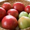 『 花粉症 』 トマトで悪化するって本当? 本当です !!