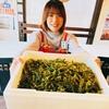 新鮮直送海ぶどう!羽村で海ぶどうが食べられる居酒屋 炭火屋 串RYU
