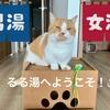 銭湯の番頭猫るるちゃんとドライヤーの買い替え。