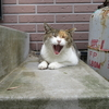 藍島・馬島の魅力 ~さくら猫の島~