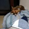 愛犬の購入価格9万、これって適正価格?