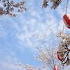 さがみ湖さくら祭り 相模湖公園の桜