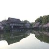 【京都 桜旅】絶対行っておきたい桜スポット厳選3選