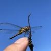 蟻に蛍に百足に蜻蛉…将軍は昆虫がお好き~『麒麟がくる』第32回