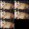 Python+OpenCVで画像をリサイズして保存する